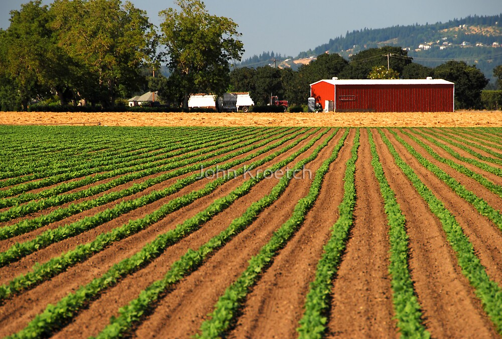 Planted Crops Leading to Red Barn by John Kroetch