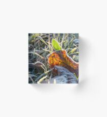 fallen foliage on a green grass covered with frost Acrylic Block