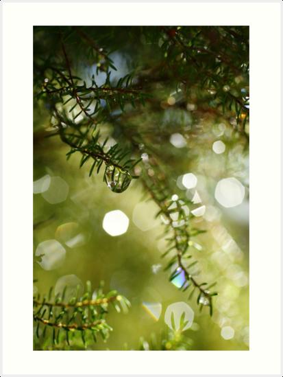 Raindrops by Gaspar Avila