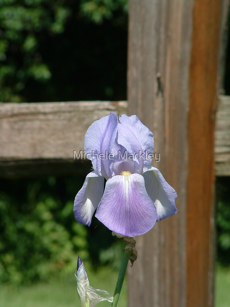 Iris with Fence by Michele Markley