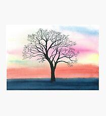 Winter oak  Photographic Print