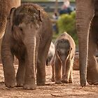 Family by AnnDixon