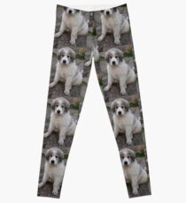 great pyrenees puppy Leggings