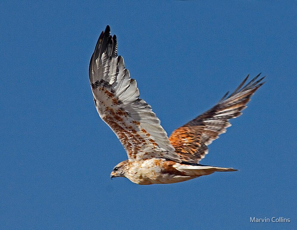 Light Morph Ferruginous Hawk by Marvin Collins