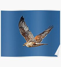 Light Morph Ferruginous Hawk Poster