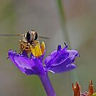 Hoverfly by Gary  Conyard