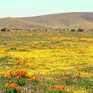 Wildflowers by adamgrell