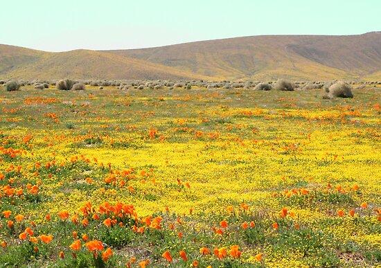Wildblumen von adamgrell