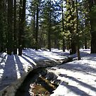 Mount San Jacinto State Park by adamgrell