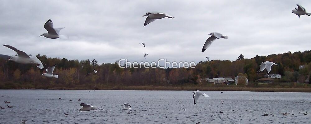 Seagulls by ChereeCheree