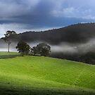 Fields of Green by Barbara Burkhardt