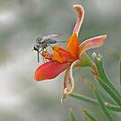 Mosquito by Gary  Conyard