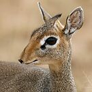 Wild eyes - Les yeux sauvages by Yves Roumazeilles
