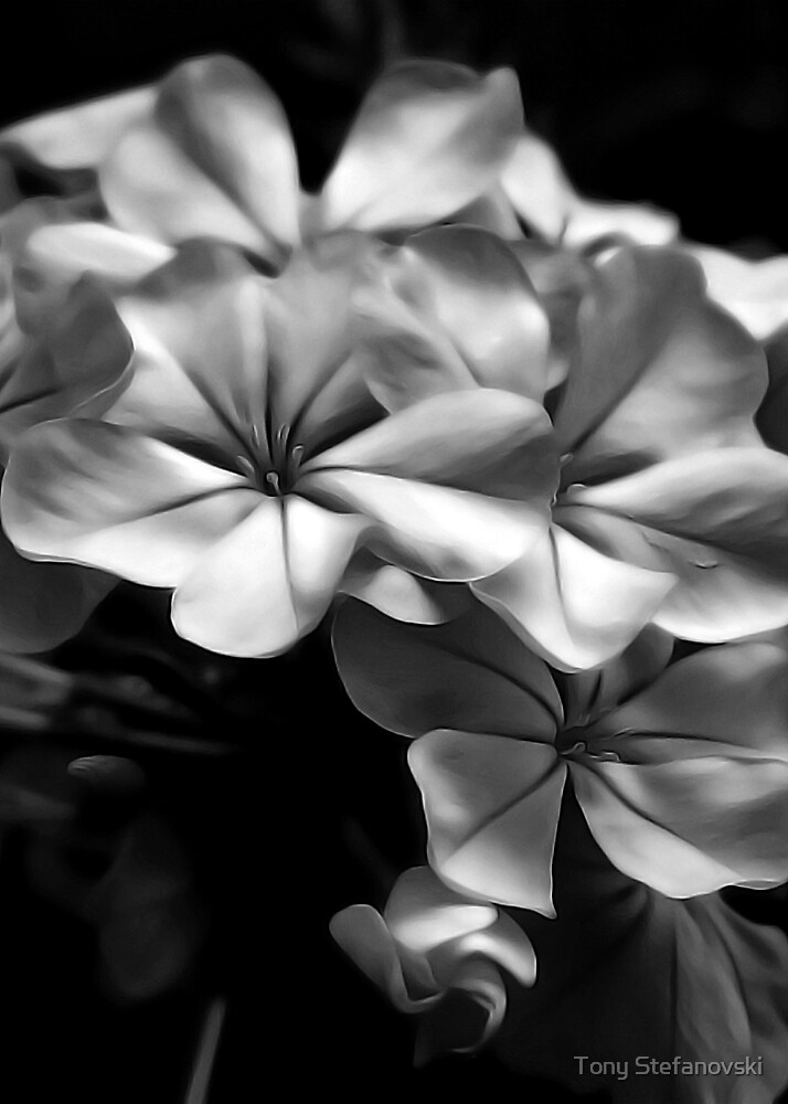 Soft Flowers - Black & White by Tony Stefanovski
