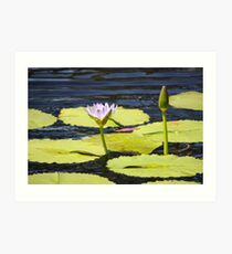 Lily Pad in Flower on Rippling Pond. Art Print
