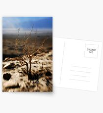 death valley vegetation  Postcards