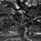 Angel Oak Tree 2 by Kathleen Struckle