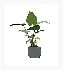 houseplant in a grey pot Photographic Print