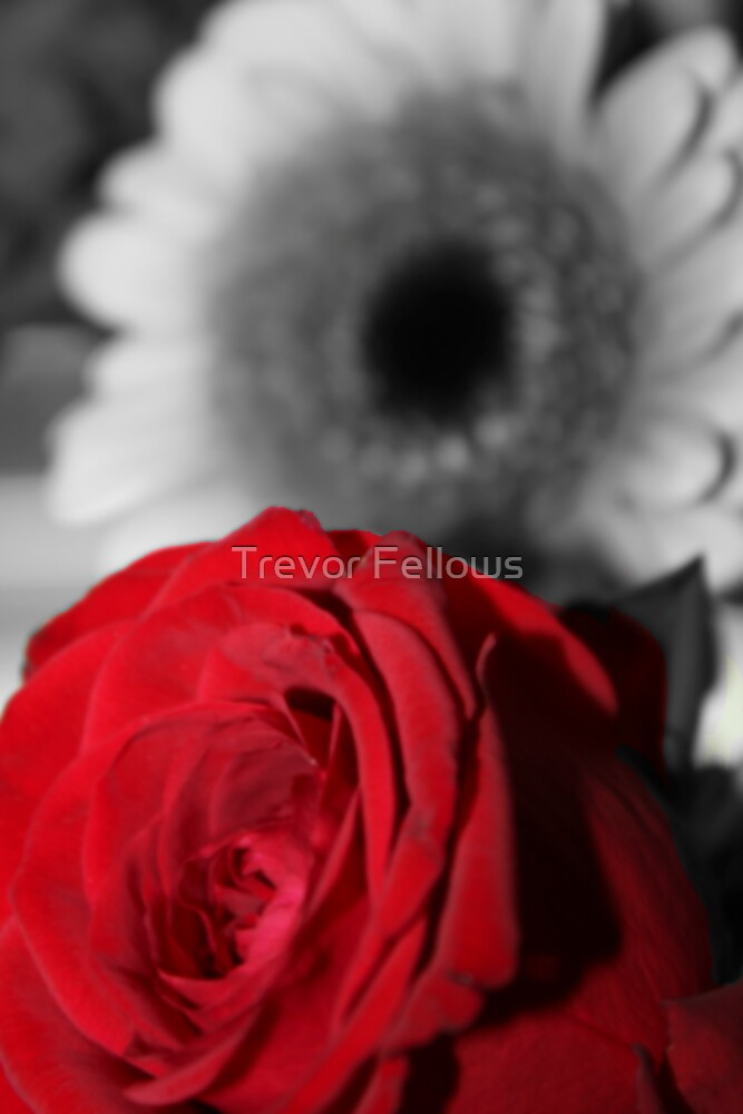 Red is my heart by Trevor Fellows