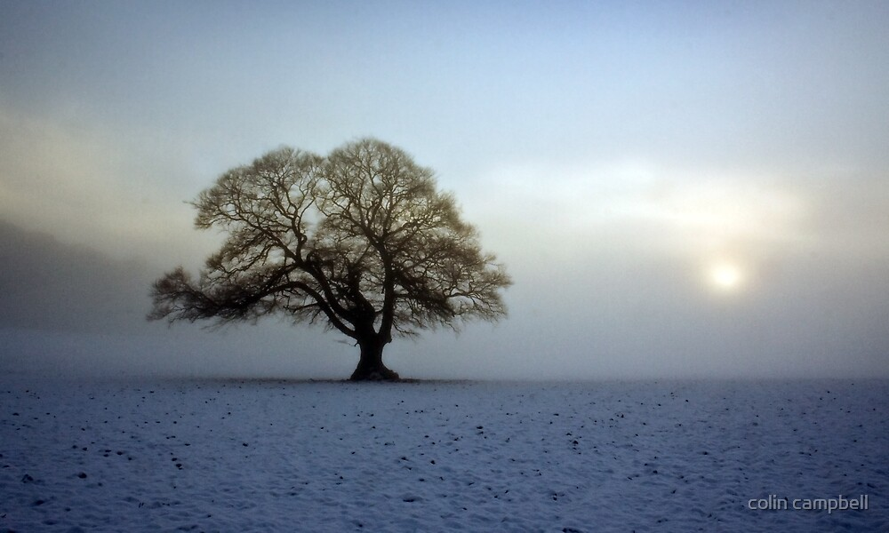 Winter fog breaking III by colin campbell