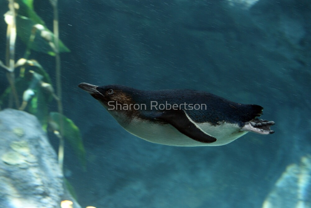 Swim Penguin by Sharon Robertson