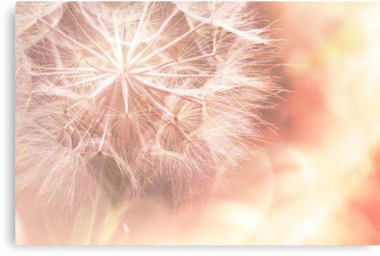 Pink Dandelion Macro Photography by EKartPrints