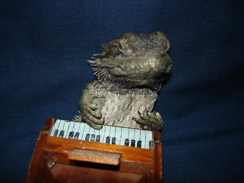 Piano Dragon by Sharon Stevens