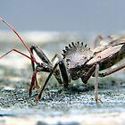 wheel bug by LoreLeft27