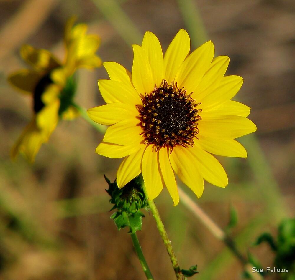 """Shine on me Sunshine"" by Sue  Fellows"