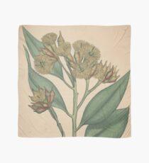 Botanical illustration: Eucalyptus robusta  – State Library Victoria Scarf