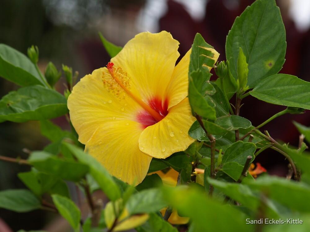 Hawaiian Beauty by Sandi Eckels-Kittle
