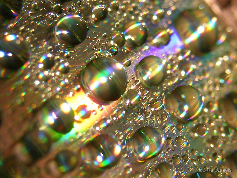 Pearls by Barrie Daniels