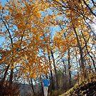 Autumn Walk by John Kroetch