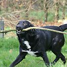 It's Never to Big for a Dog! by Pamela Jayne Smith