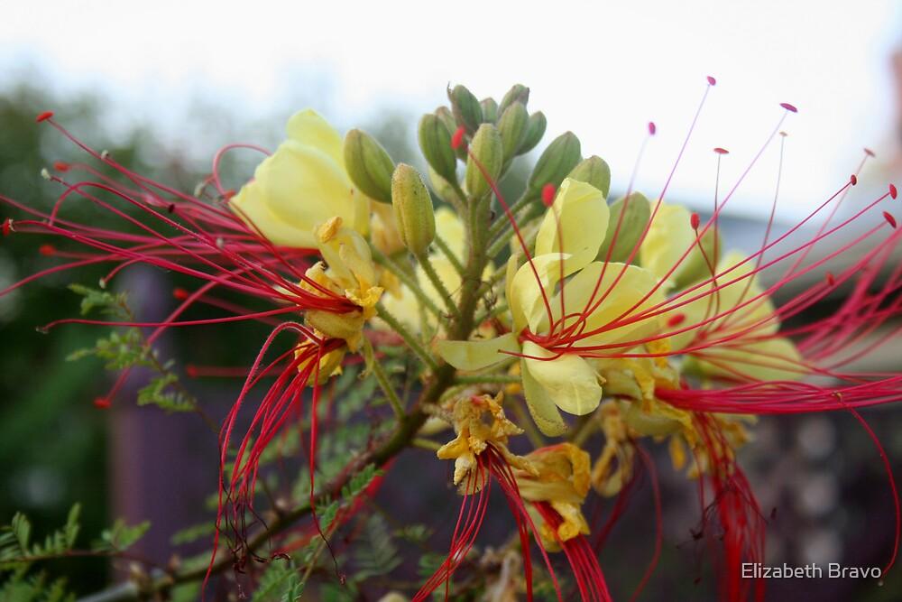 Natures Fireworks by Elizabeth Bravo