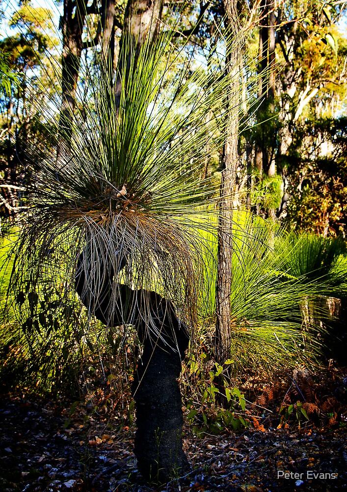 Australian Grass Tree by Peter Evans
