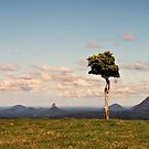 One Tree Hill, Maleny by Jenelle  Irvine
