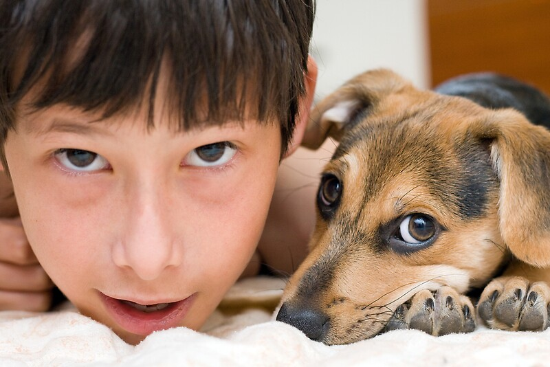 essay on dog as a domestic animal Essay on pet there are many reasons why dogs are called the best pet firstly, a pet is a domestic animal that is treated with affection and care, tamed to offer pleasure and companionship to the owner.