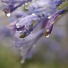 Love in WATERCOLOURS by Michelle Lee Blatt
