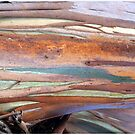 Colourful Bark by Marguerite Foxon