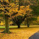 Golden Brown by Anita Harris