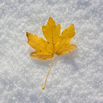 Yellow leaf on the snow by martinbenito