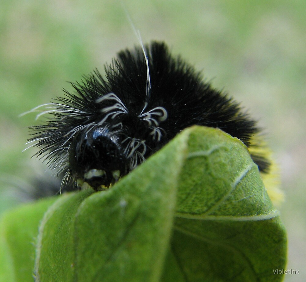 Caterpillar on Leaf. by VioletInk