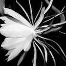 Queen of the Night (B&W) by Terri~Lynn Bealle