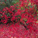 Red Fall by Anita Harris
