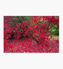 Red Fall Photographic Print
