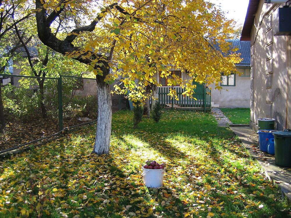 Fruits of autumn by TarasKokovsky