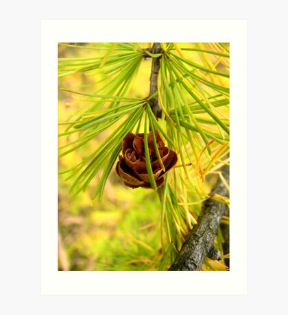 Trapped into Larch Art Print