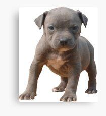 Pitbull Puppy Power Canvas Print