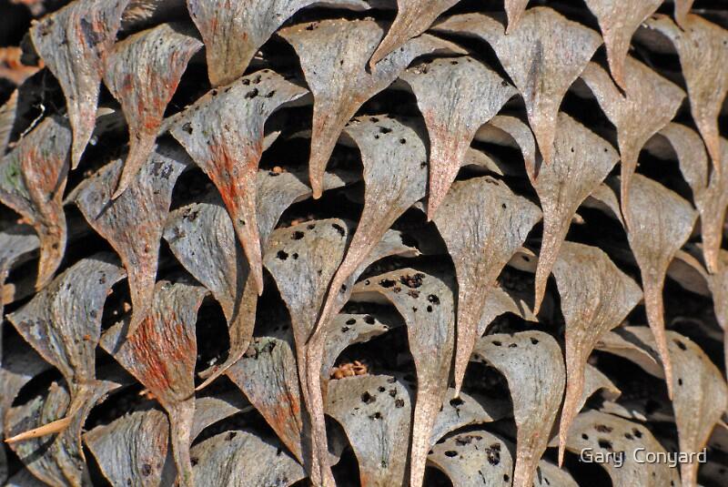 Pine cone by Gary  Conyard